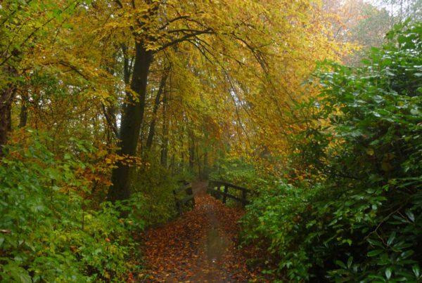 je kan ook in nederland de kracht van de natuur ervaren op het twentepad